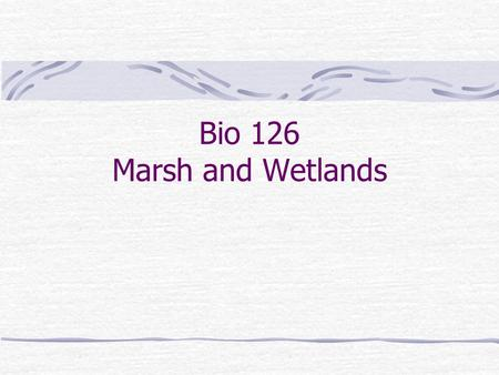 Bio 126 Marsh and Wetlands. Current state: In California we have lost 90% of our wetlands – Much of the Great Central valley was a seasonal marsh – Our.