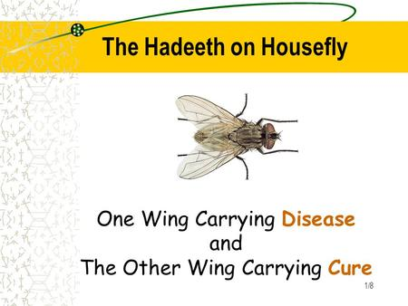 1/8 The Hadeeth on Housefly One Wing Carrying Disease and The Other Wing Carrying Cure.