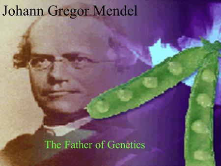 Johann Gregor Mendel The Father of Genetics. Early Life Born July 22, 1822 In Heinzendorf, Austrian Silesia Now Hyncice, Czech Republic Cobbler's son.