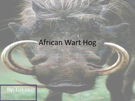 African Wart Hog By; Lukas. African wart Hog Why I chose My Animal? I chose my animal because it looked cool.