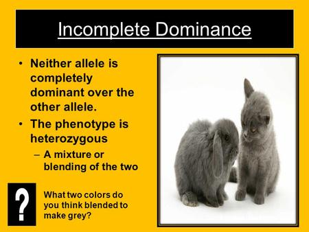 Incomplete Dominance Neither allele is completely dominant over the other allele. The phenotype is heterozygous A mixture or blending of the two What two.