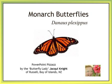 Monarch Butterflies PowerPoint Pizzazz by the 'Butterfly Lady' Jacqui Knight of Russell, Bay of Islands, NZ Danaus plexippus.