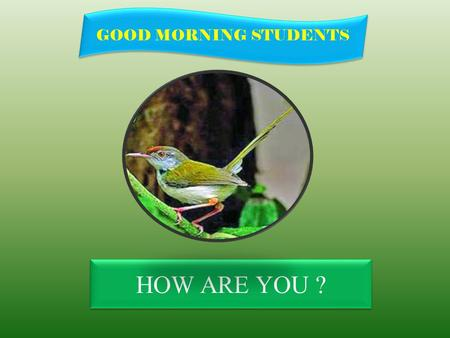 HOW ARE YOU ? GOOD MORNING STUDENTS IDENTITY Teacher Lesson SK.Md. Harununar Rashid Senior Assit: Teacher Sonatola Model High School Sonatola, Bogra.