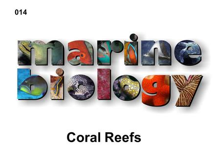 Coral Reefs 014. Coral Reef Biology Kingdom Animalia Phylum Cnideria Class Hydrozoa- hydroids Class Scyphozoa- jellies Class Cubozoa- box jellies Class.