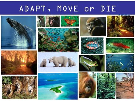 ADAPT, MOVE or DIE. Adapt? MOVE? Move?