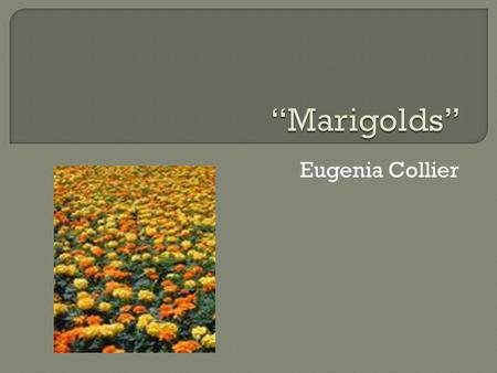 marigolds essay Marigolds essay - the leading assignment writing and editing website - get affordable essays, research papers, reviews and proposals at the lowest prices cheap paper.