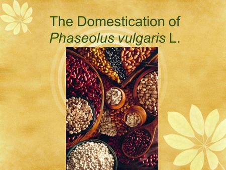 The Domestication of Phaseolus vulgaris L.. Taxonomic Overview  Family: Fabaceae/ Leguminosae  Subfamily: Papilionoideae  Tribe: Phaseolae  Phaseolus.