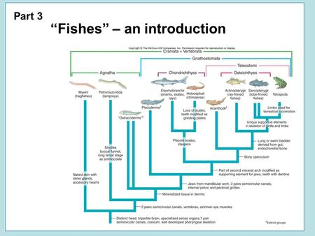 "Part 3 ""Fishes"" – an introduction. ""Fishes"" Vertebrata."