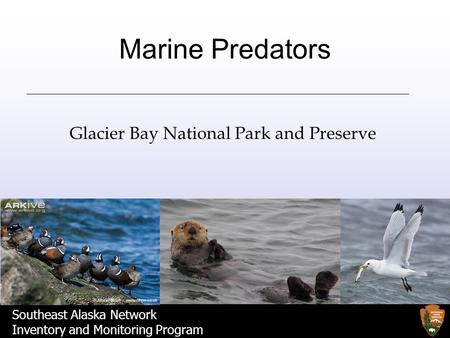 Southeast Alaska Network Inventory and Monitoring Program Marine Predators Glacier Bay National Park and Preserve.