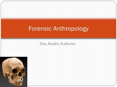 Tom, Rachel, Katherine Forensic Anthropology. Introduction The main bones we're interested in: *Cranium/Skull *Pelvis *Tibia *Femur *Humerus.
