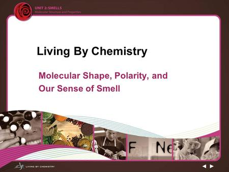 Molecular Shape, Polarity, and Our Sense of Smell