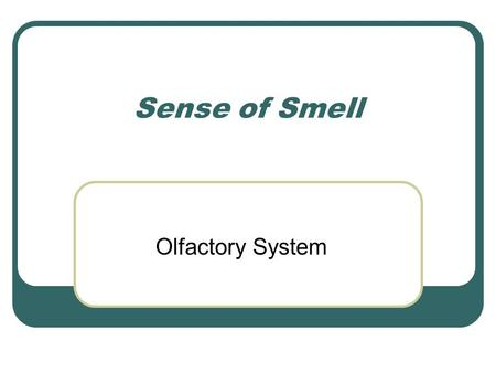 Sense of Smell Olfactory System. SMELL Smell is the most primitive sense Evokes memories Most animals use smell to distinguish good from bad In humans,