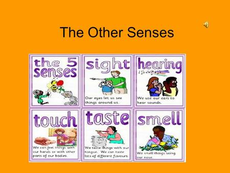 The Other Senses. The other Senses The major sense are seeing & hearing –Without our sense of Touch Taste Smell Body motion & position –Serious handicapped.