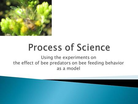 Using the experiments on the effect of bee predators on bee feeding behavior as a model.
