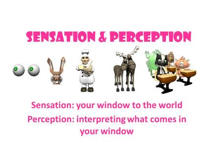 Sensation & Perception Sensation: your window to the world Perception: interpreting what comes in your window.
