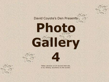 David Coyote's Den Presents Photo Gallery 4 Slides advance at 20 second intervals, or by clicking anywhere on the screen.