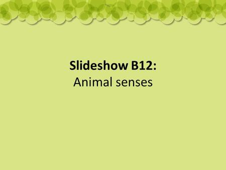 Slideshow B12: Animal senses. Sense of touch: most sensitive nose – star-nosed mole.