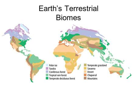 Earth's Terrestrial Biomes
