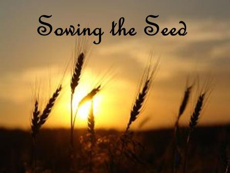 Sowing the Seed.
