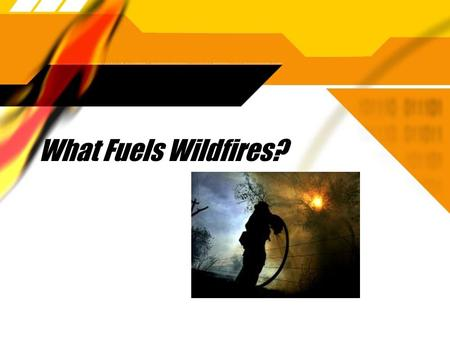What Fuels Wildfires?. What fuels So Cal wildfires?