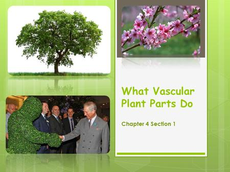 What Vascular Plant Parts Do Chapter 4 Section 1.