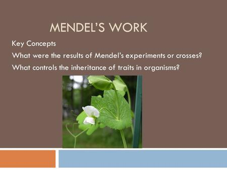 MENDEL'S WORK Key Concepts What were the results of Mendel's experiments or crosses? What controls the inheritance of traits in organisms?