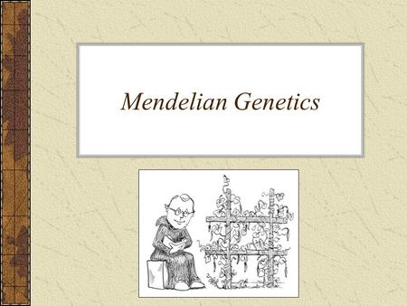 Mendelian Genetics. Mendel & His Pea Plants Genetics – the study of heredity Heredity – how traits are passed from parent to offspring A man by the name.