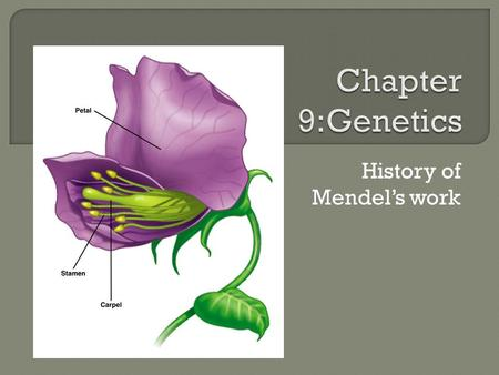 History of Mendel's work.  Watch Video from 2:45 – 11:45 to introduce the thoughts of the ancient Greeks to Darwin…