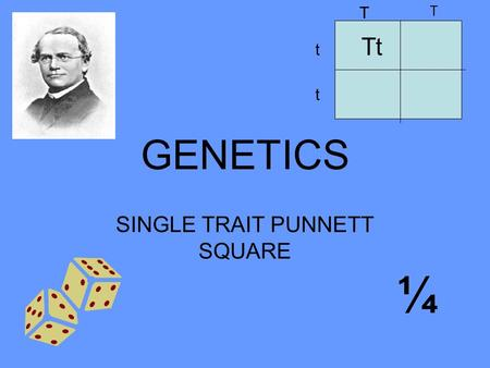 SINGLE TRAIT PUNNETT SQUARE