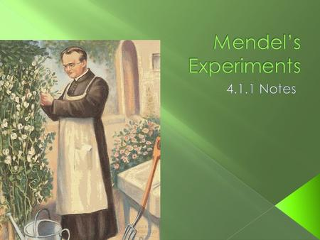 " Gregor Mendel was a priest from the mid 19 th century who conducted experiments in his garden.  Mendel is considered the ""Father of Genetics!"""