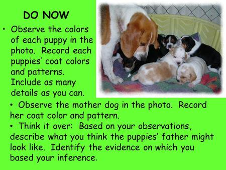 DO NOW Observe the colors of each puppy in the photo. Record each puppies' coat colors and patterns. Include as many details as you can. Observe the mother.