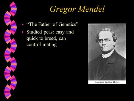 "Gregor Mendel w ""The Father of Genetics"" w Studied peas: easy and quick to breed, can control mating."