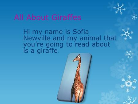 All About Giraffes Hi my name is Sofia Newville and my animal that you're going to read about is a giraffe.