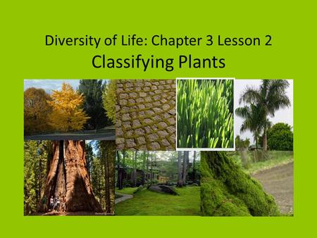 Diversity of Life: Chapter 3 Lesson 2 Classifying Plants