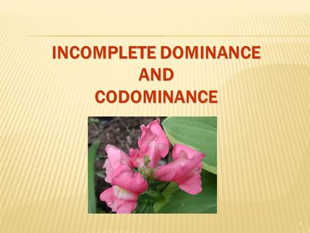 INCOMPLETE DOMINANCE AND CODOMINANCE 1. INCOMPLETE DOMINANCE  F1 hybrids in betweenphenotypes  F1 hybrids have an appearance somewhat in between the.