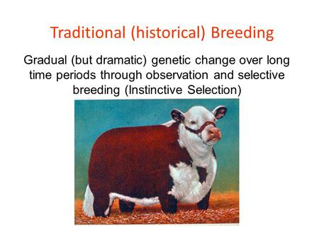 Traditional (historical) Breeding