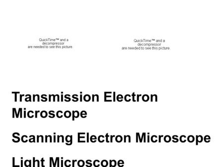 Transmission Electron Microscope Scanning Electron Microscope Light Microscope.