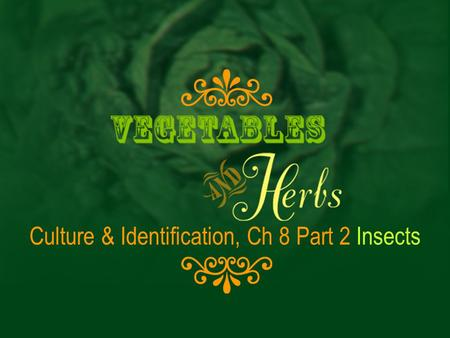 Culture & Identification, Ch 8 Part 2 Insects. Cultivation & Identification, Chapter 8, Insects Vegetable Pests
