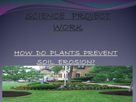 HOW DO PLANTS PREVENT SOIL EROSION?. HOW TO PREVENT SOIL EROSION Did you know that soil erosion is a natural process that normally causes little problems?