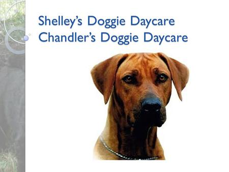 Shelley's Doggie Daycare Chandler's Doggie Daycare.