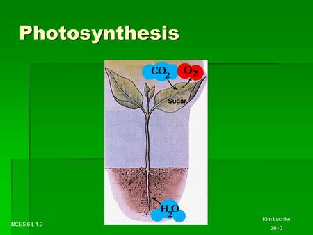 Photosynthesis Kim Lachler 2010 NCES 6 L 1.2. Photosynthesis  Plants can make their own food through a process called Photosynthesis.  Photo = light.