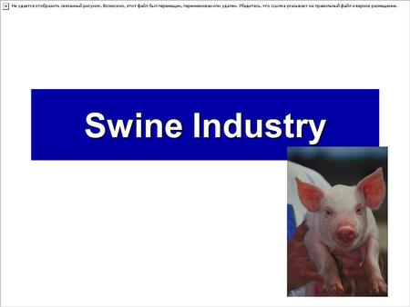 Swine Industry. Swine Trivia  How did Wall Street get it name? –Free roaming pigs once rampaged through New York City. They erected a wall to help prevent.