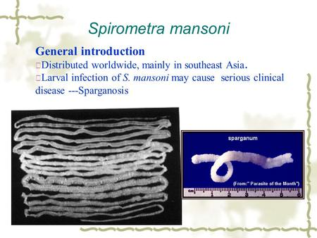 Spirometra mansoni General introduction ※ Distributed worldwide, mainly in southeast Asia. ※ Larval infection of S. mansoni may cause serious clinical.