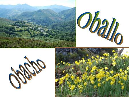 Oballo belongs to Cangas del Narcea. It is placed at 700 meters of altitude at the level of the sea, and at a distance of 22 kilometres from the capital.