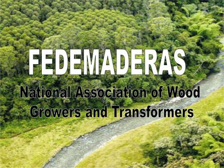 LA INDUSTRIA FORESTAL EN COLOMBIA C°C° Planted Forest Raw materials/Transformation Furniture Other ProductsVendor and Supplier FEDEMADERAS Production.