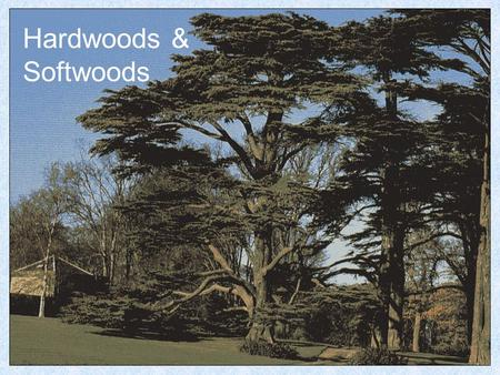 Hardwoods & Softwoods. Hardwoods Hardwoods are considered to come from trees with Broad Leaves. Oak.