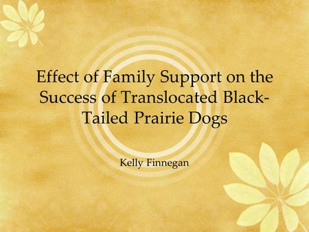 Effect of Family Support on the Success of Translocated Black- Tailed Prairie Dogs Kelly Finnegan.
