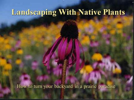 Landscaping With Native Plants How to turn your backyard in a prairie paradise.