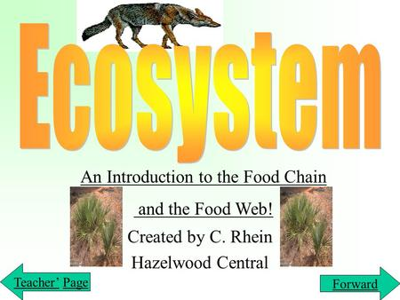 Created by C. Rhein Hazelwood Central An Introduction to the Food Chain and the Food Web! Teacher'Teacher' PagePage Forward.