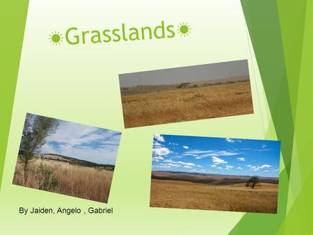 ☀ Grasslands ☀ By Jaiden, Angelo, Gabriel. Where is ecosystem located?  Grasslands can be found just about anywhere  The Great Plains stretch from Canada.